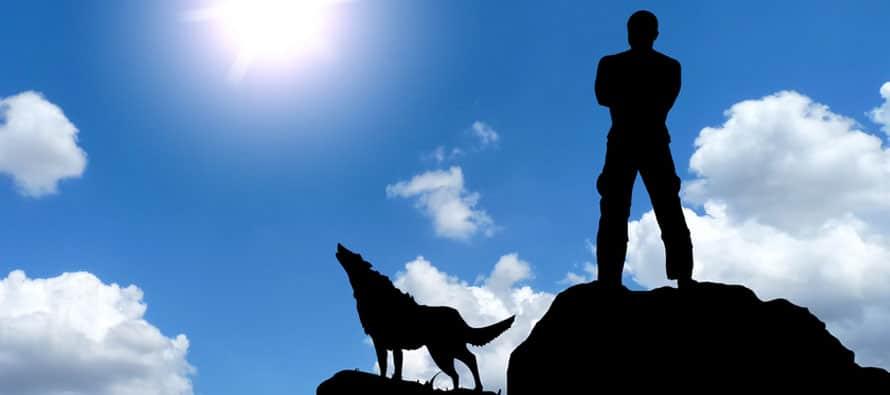 Photo of להתבודד עם זאב בודד